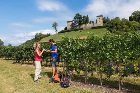Alpe-Adria Trail: Food, Wine and Cherries