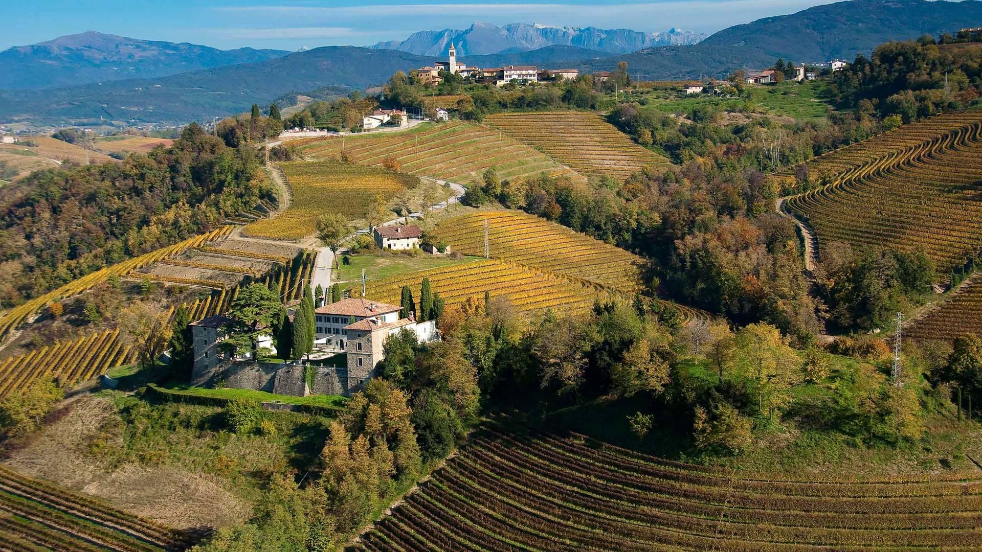 E29 Weinberge im Collio bei Cividale c Turismo FVG