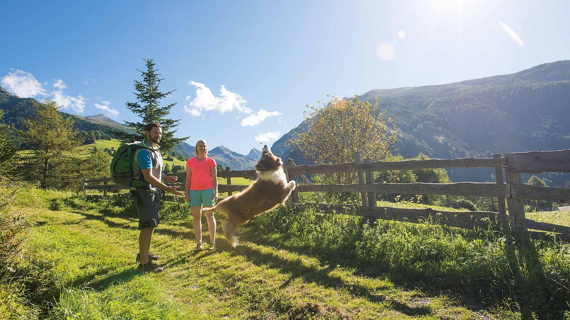 Wandern mit hund im nationalpark hohe tauern original
