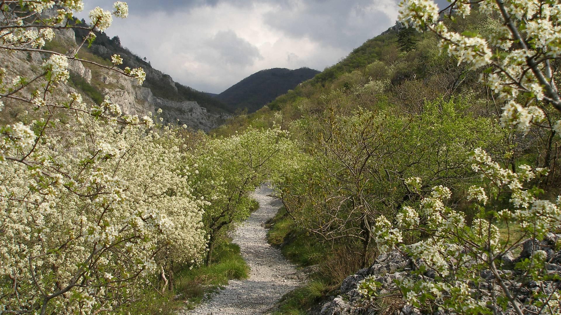 Val rosandra einziger taleinschnitt des triestiner karsts beeindruckt als naturschutzgebiet mit zahlreichen naturschonheiten und historischen denkmalern original